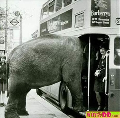 funny-pictures-weird-passenger-D5P